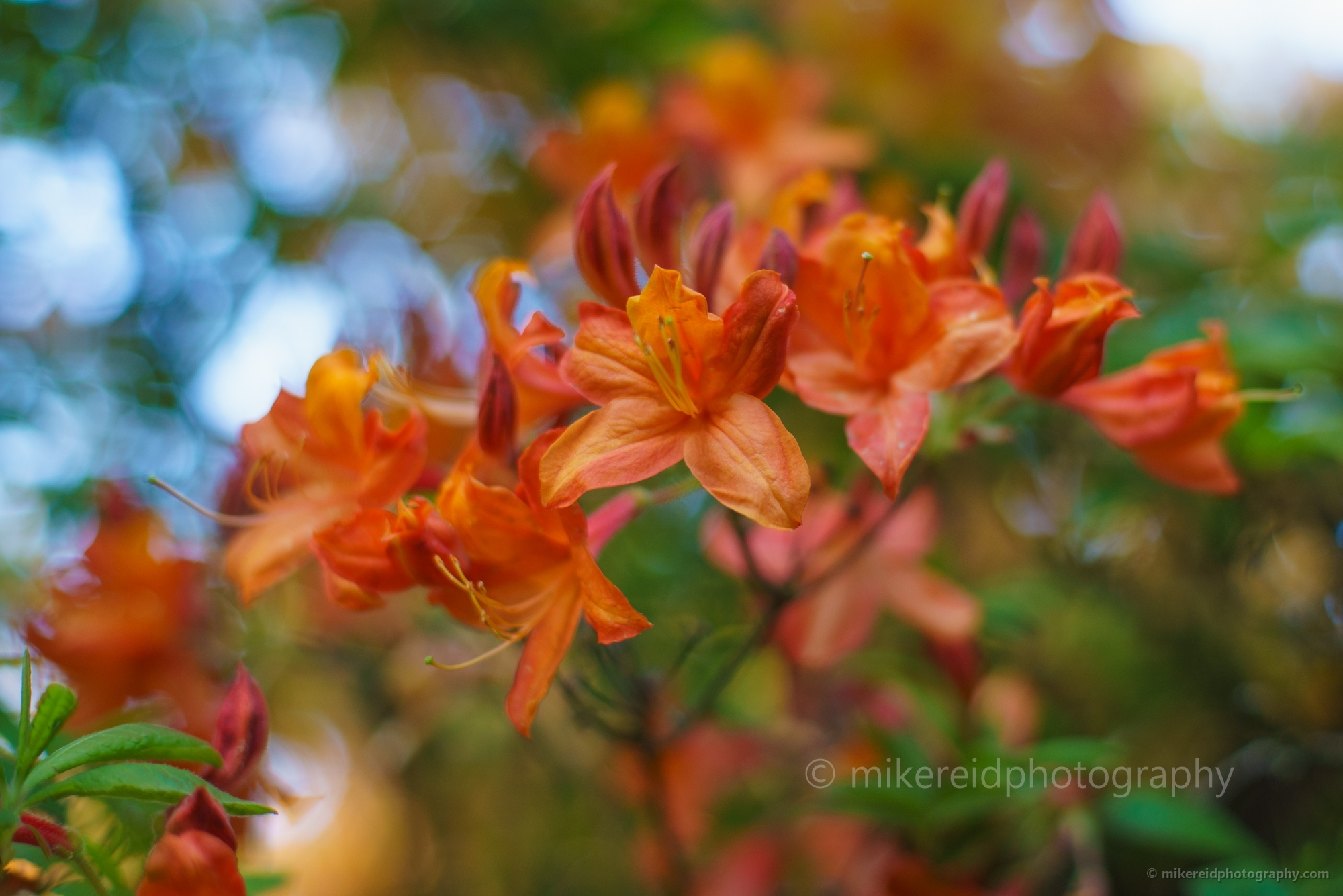Flower, Botanical And Landscape Photography By Mike Reid